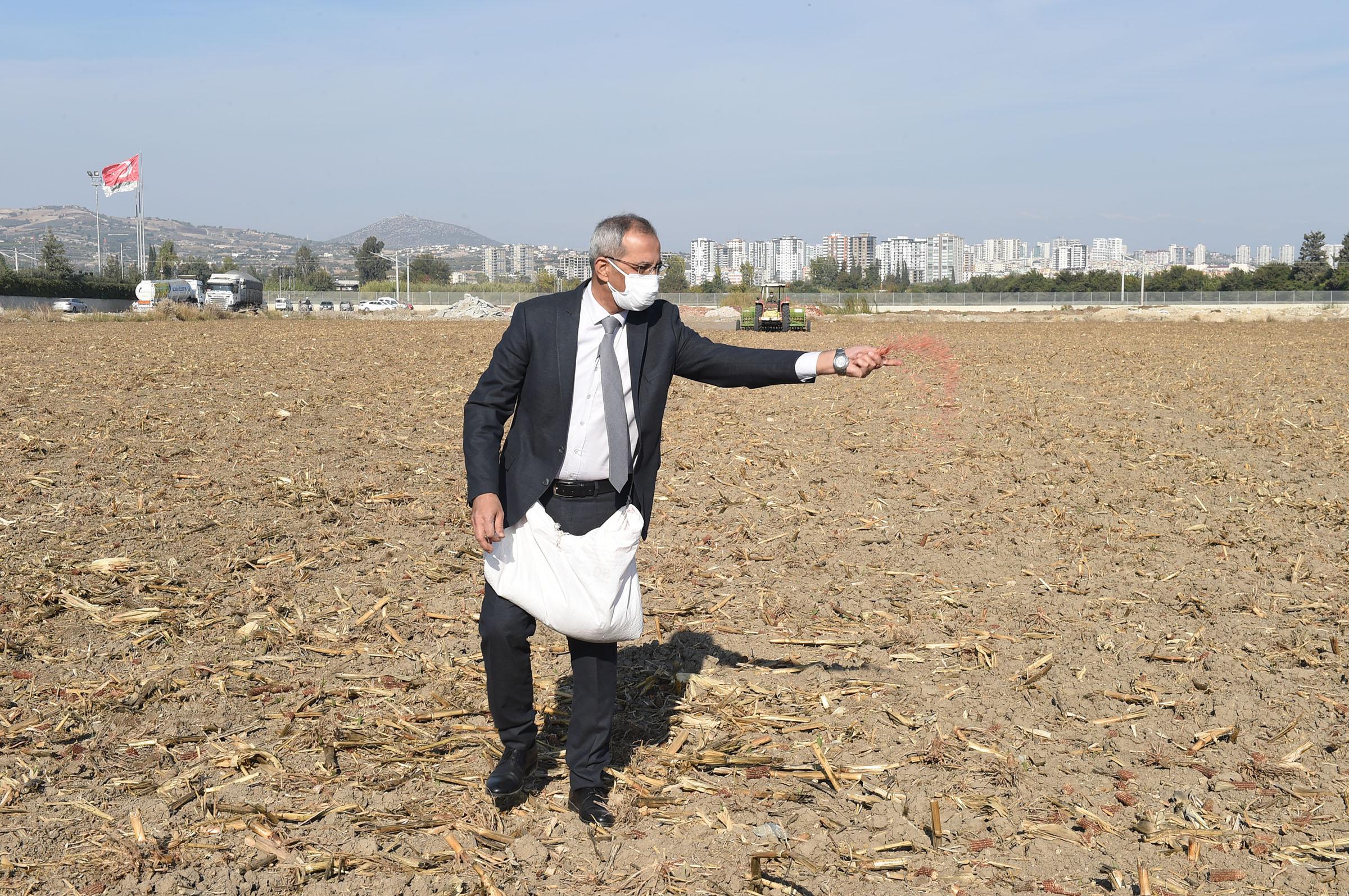 40 Dönümlük araziye Kunduru Buğdayı ekildi.
