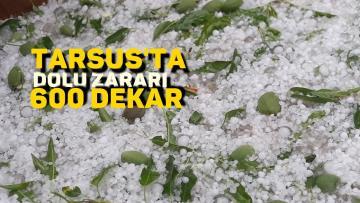 Dolu Tarsus'ta 600 dekar ekili tarım arazisini vurdu.