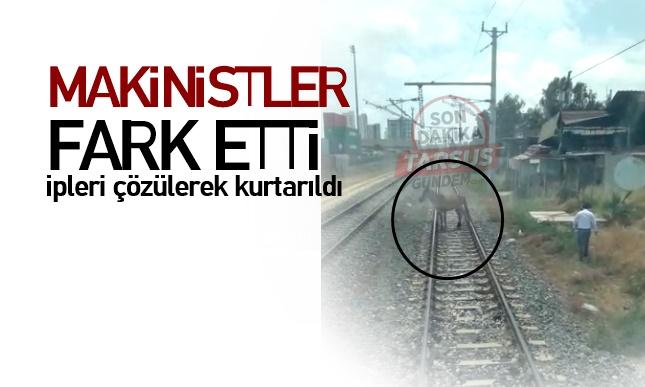 Mersin'e giden yolcu treni makinistleri ,Raylara bağlı At'ı kurtardı!